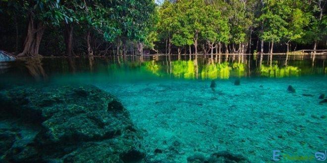 بهترین جنگل های تایلند