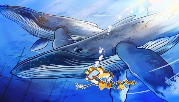 نهنگ ها بیت کوین خریدند؟